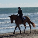 Trotting day on the beach of Oliva (spain) during the CSI of february